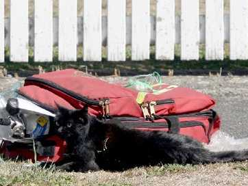 Firefighters revived a black cat with oxygen after it was rescued from a house fire in Cole St, Masterton.