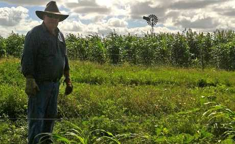Massie farmer Bill Bowen in front of what once was a thriving crop.