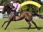 Diademe is one of those horses that suddenly grabs the headlines from off the radar.