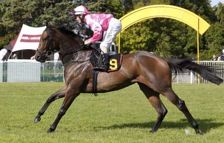 Talented Cambridge mare Diademe has only been to the races eight times.