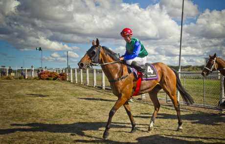 LUCKY SIX: David Walsh won race six at Waipukurau on 6-year-old Veldt yesterday.