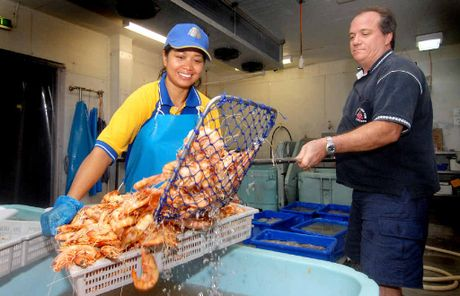 GOOD HAUL: Mackay Reef Fish Supplies owner David Caracciolo and Neng Nurhayati with a batch of prawns.