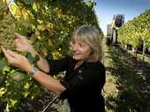 Hawke's Bay is among many wine growing regions in the country on the verge of a vintage year,