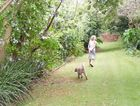 Virginia walking a friends dog. The property has stunning gardens in all directions; ocean facing, west facing at the front of the house, this particular pathway is above the tennis courts.