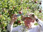 A report detailing the costs resulting from an irrigation ban in Twyford has been commissioned by the Hawke's Bay Fruitgrowers Association.