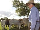 Making it look easy; Barrie Hughes calmly controls his dog Boris to hold and move his cattle around his Bundaberg property with minimum fuss. Photo: Simon Young / NewsMail
