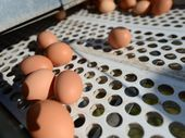 AUSTRALIA  is facing an egg shortage ahead of the peak holiday season after an outbreak of bird flu shut down two poultry farms.