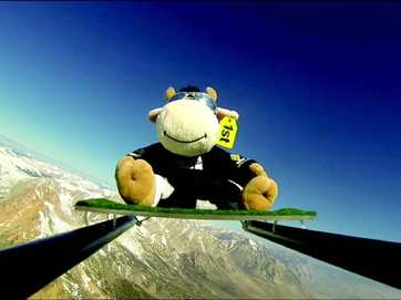 Eva the mascot cow is on her way back to Tauranga.