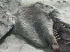 The rotting remains of a killer whale washed ashore a Bay of Plenty beach is causing a global media frenzy after the giant corpse was dubbed a &quot;sea monster&#39;&#39;.