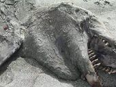 A MARINE creature which washed up on a New Zealand beach caused a stir with footage of the creature being posted online.