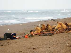 Fur seal rescue in pictures