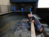 OPTIMISTIC  thieves attempted to steal a shark and fish from Hervey Bay's Reefworld Aquarium early on Monday morning.