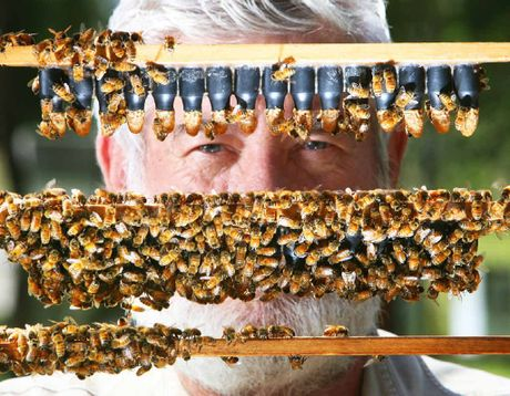 Beekeeper Trevor Weatherhead is executive director of the Australian Honey Bee Industry Council.