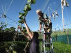More than 150 kiwifruit growers attended a recent information evening to learn more about the offer to convert part of their orchards to the new G3 gold variety. 