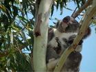 WILDLIFE advocates are funding a campaign against the Queensland Government as new land-clearing laws sit ready to be passed by Parliament.