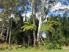 Until a week ago we had a 30m-plus eucalyptus behind our house. It was a gorgeous thing, obviously much older than I, and I was very emotionally attached to it.