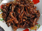 THE United Nations has issued official advice suggesting that Earth's inhabitants eat insects to help combat food-insecurity and reduce pollution worldwide.