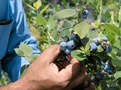 PROJECT BERRY: Blueberry growers are working on land and water improvements in the catchment.