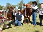THIS years Gympie Show Stud Beef Champion of Champions, GK Arabella F11, has been described as an outstanding female with the whole package.