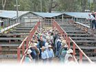 WHILE it may not be as dire for Darling Downs cattle producers as it is for those struggling with drought out west, times are still tough.