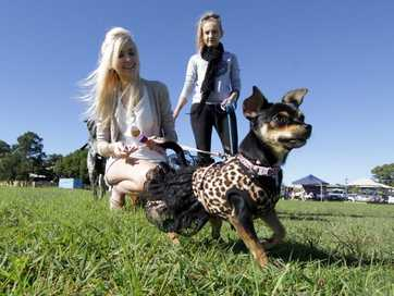 RSPCA Millions Paws Walk in Maryborough on Sunday.