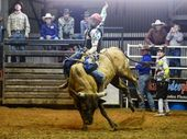 Brodie Adams, Bull ride. Photo Allan Reinikka / The Morning Bulletin
