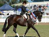 SHOWS BEST: Supreme hack Vanity, ridden by Ashlee Christensen.