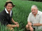 GRAZING varieties were under the spotlight at an oats demonstration site field day held on Clay and Peter Smith's Nobby property Hurston Downs last Tuesday.