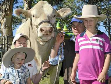 CATTLE FAMILY: Charolais bull Calmview Galliant with Belinda Dockrill, Sam Butler, 2, James Dockrill and Sophie Butler, 7, from Clovass at Beef Meets Reef. Belinda (below) watches as Sam tries his hand at leading the big bull at the same event.