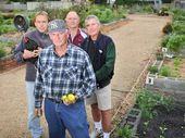 BAFFLING: At front, Keith Spearing, back from left, Tony Meldrum, Mal Lowe and Kevin Strong, pictured at the Ballina Community Garden where a number of items have been stolen.