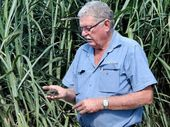 DIRTY BUSINESS: Mike Harrison in front of a stand of cane grown in soil in which pineapples were grown previously.