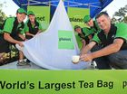 WHAT better than a nice cup of tea to celebrate Coolum becoming the home of a world record-holder.