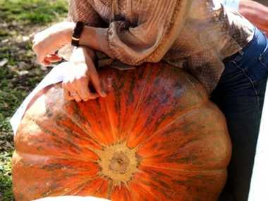 Winner of the biggest pumpkin at Clermont Show 2012, Fiona James.