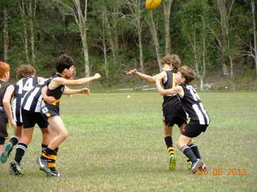 Tweed Coast Tigers junior teams v Byron Bay Magpies at home (Pottsville) on Sunday May 26, 2013.