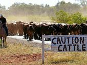 GRAZIERS are urged to seek alternative measures to support drought-affected stock as temporary grazing permits loom closer to expiring.