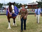 Greta Stanfield with her winning champion mare Dugandan Emily at the Scenic Rim Clydesdale Spectacular on Saturday.