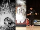 Viral videos of the week - June 4, 2013