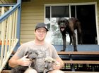 GYMPIE couple Phil Weaver and Jamie Lee are convinced the death of three pet dogs in a matter of days is the result of baiting.