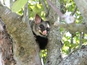 Chilling conservationists across the Waikato, the Department of Conservation is working hand in glove with the police in a co-ordinated effort to quell opposition in advance of controversial possum control operations under way this month.