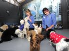 Devoted Bay pet owners are spending up to $175 a week so their pampered pooches can be entertained while they work.