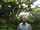 Nearly 50 abandoned kiwifruit orchards pose a huge biosecurity risk and could reignite the Psa epidemic as growers face losing an estimated $200 million this year.