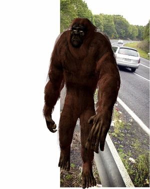 Yowie Sighted in Austrailia