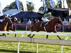 CONSERVATORIUM proved far too good for his rivals in the City of Ipswich Eye Liner Stakes (1350m) on Saturday.