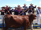 SHOW CHAMPS: Monto State High School's Cattle Club finished third at the Rockhampton Show. Kirsten Vanclooster, Brock Dahtler, Nanci Wilson, Amy Birch, Maddyson Moir, Megan Birch, Madison Low, Cassie Wilson, Cheyenne Johnston, Jared O'Sullivan, Cassie Johnston. Hiding behind the heifer is Melissa Birch.