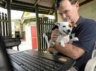 BACKYARD breeders have been let loose on central Queensland Facebook pages, with one dog lover claiming sites don't enforce state law on selling animals.