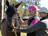 MORE than 150,000 doses of the hendra virus vaccine have been administered to horses across Australia since it was introduced last year.