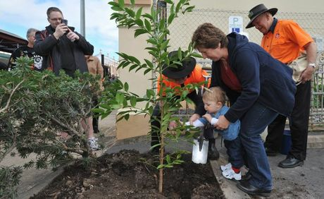One year old Bailey Bray from Gympie helps put some soil around a kauri pine planted to celebrate the original Mary Ann steam train's 140th birthday that his great, great, great, great grandfather, Robert Blake, was an engineer on. He is pictured with his grandmother Merril Patrick.