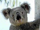 SOMERSET residents are being encouraged to share their views on the development of a Brisbane Valley Koala Precinct by attending a public meeting this month.