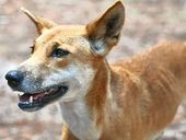 "NATIONAL Parks Minister Steve Dickson is calling on Fraser Island visitors and residents to be ""dingo safe"" during the summer holidays."