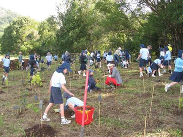 On Sunday 28th July around 100 people turned out to help plant 2000 tree's on the banks of the Tweed River just outside of Murwillumbah.